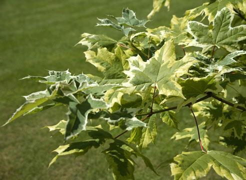 Живая изгородь: что посадить под забором или вместо него