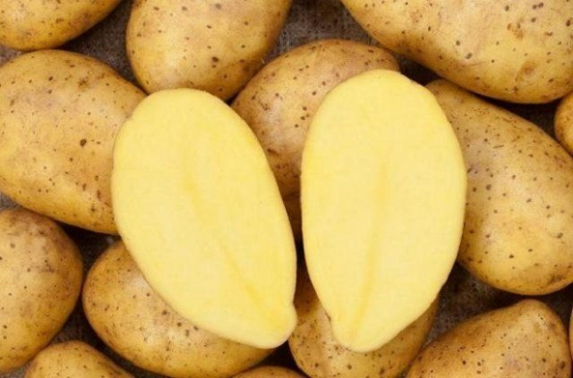 разрезание клубней перед посадкой картофеля
