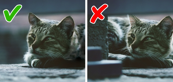 11 признаков плохого самочувствия кошки, на которые обычно не обращают внимания