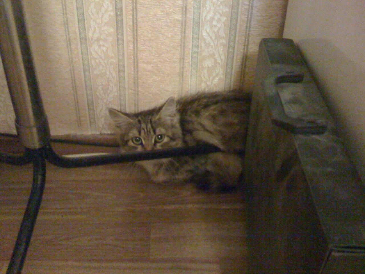 Привел его(её) в дом коты, кошка