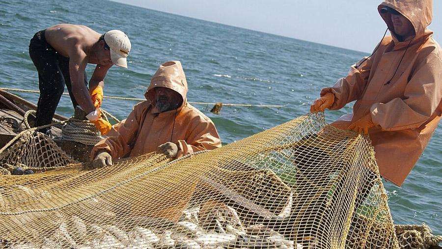 какой штраф нужно заплатить за незаконную ловлю устриц в бухте морского дракона