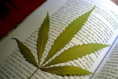 Конопля: яд или лекарство? Узнай о невероятной пользе скандального растения!