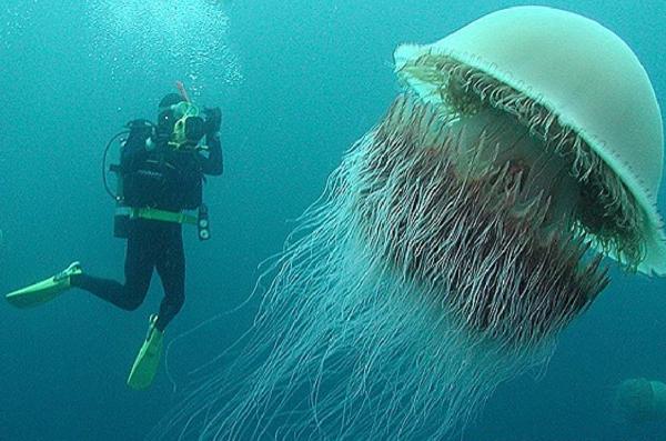 Самые опасные медузы в мире