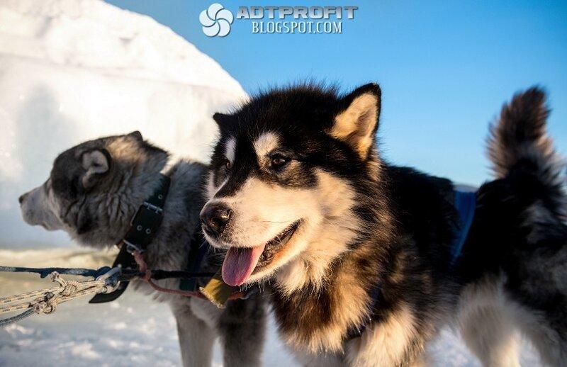 Зимний Байкал - 2019 Покрытый, участка, железной, зимней, проложенной, специально, поезд, ходил, внедорожники, ездят, спокойно, прочный, Байкале, Ангара, вытекает, небольшого, льдом, кроме, целиком, замерзает