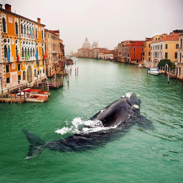 По улицам кита водили...