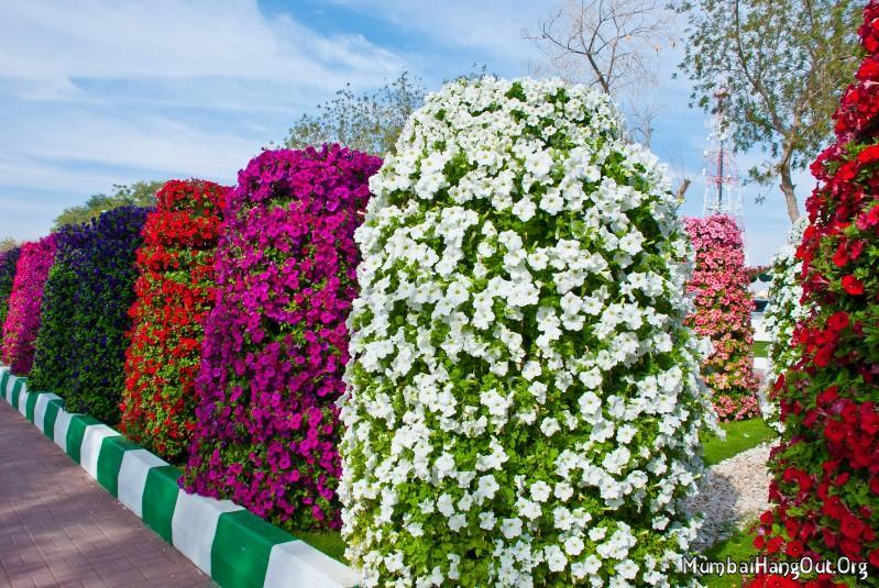 Крупнейший в мире парк цветов