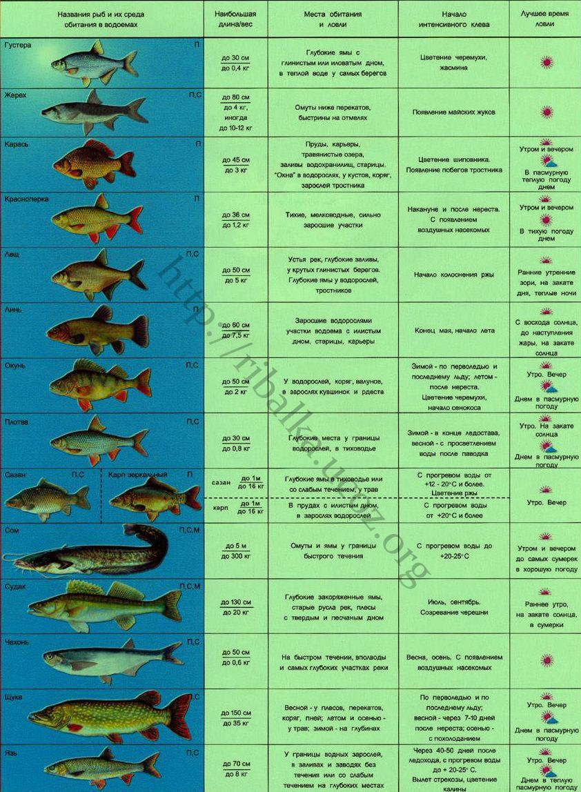 температура и клев рыбы весной