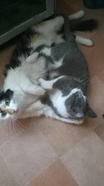 Котик Кузя. Был найден в коробке, слепой, в истощенном состоянии...