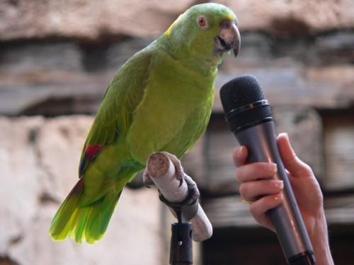 http://www.strausof.net/wp-content/uploads/2011/06/kak-nauchit-popugaya-govorit_280_200.jpg