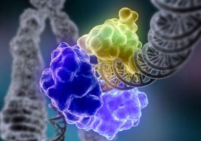 Ученые: возлюбленных всю жизнь держит вместе ДНК