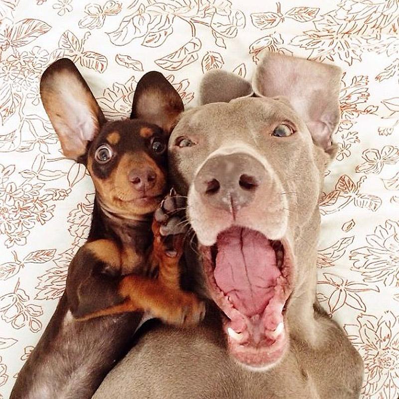 bffdogs07 Как животные становятся звездами интернета