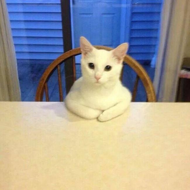 Сидячие коты