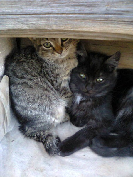Помогите пристроить котят