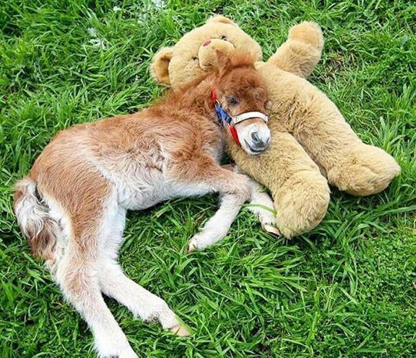 15 крошечных лошадок, похожих на игрушки животные, лошадки, милые