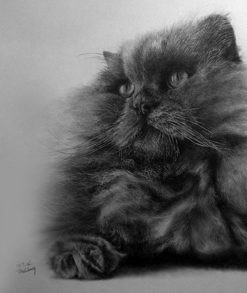 drawncats02 Мастер карандашного наброска — Пол Ланг