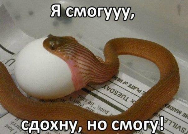 Вся суть змей!)) Смотрите)