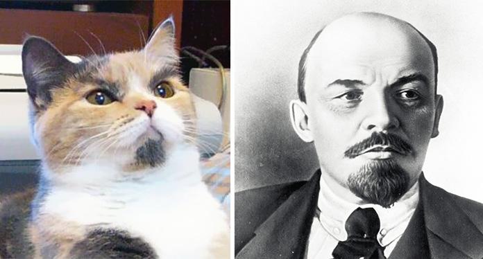 15 котов, похожих на кого угодно, только не на самих себя)