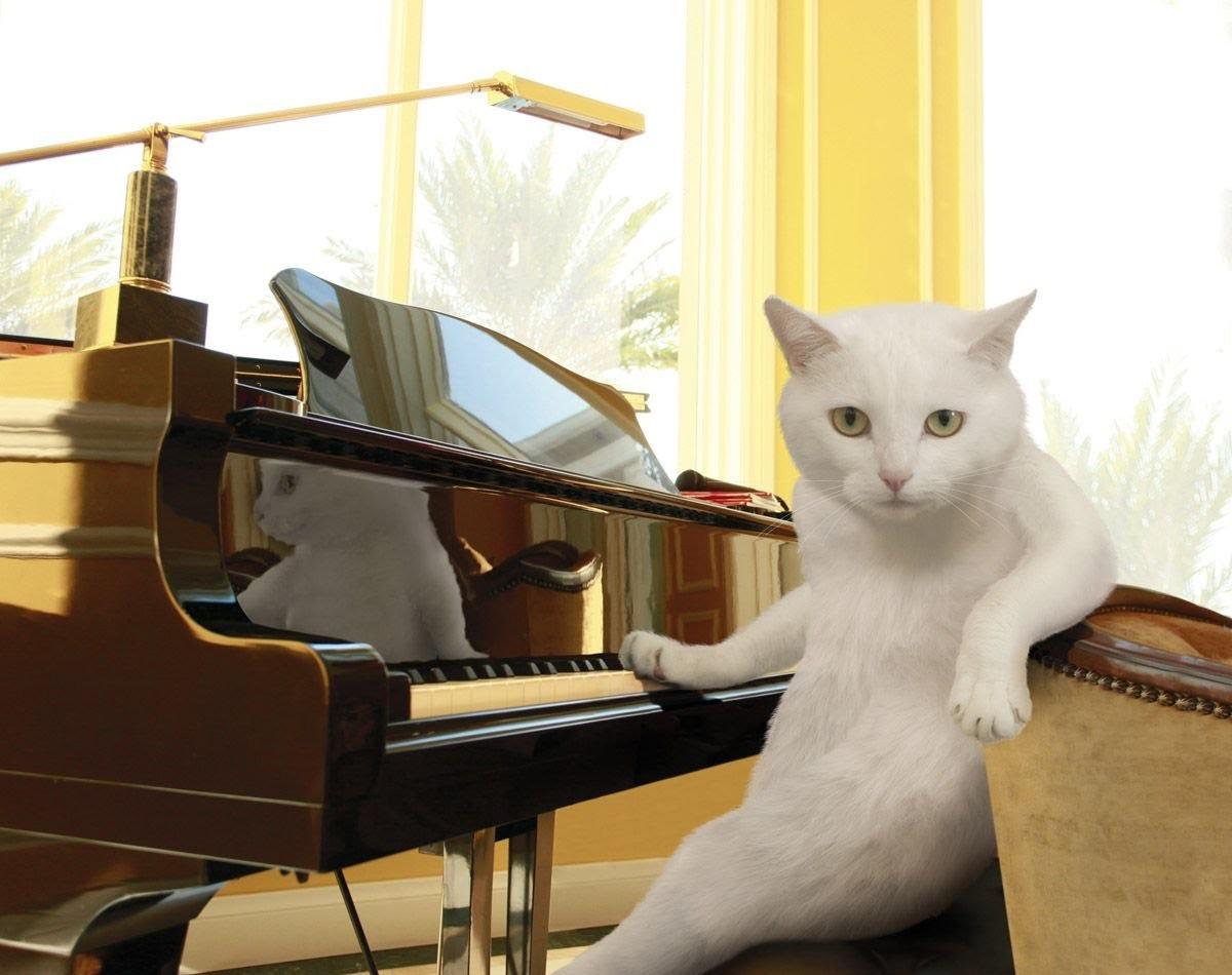 1. Пианино для кошек видео, котики