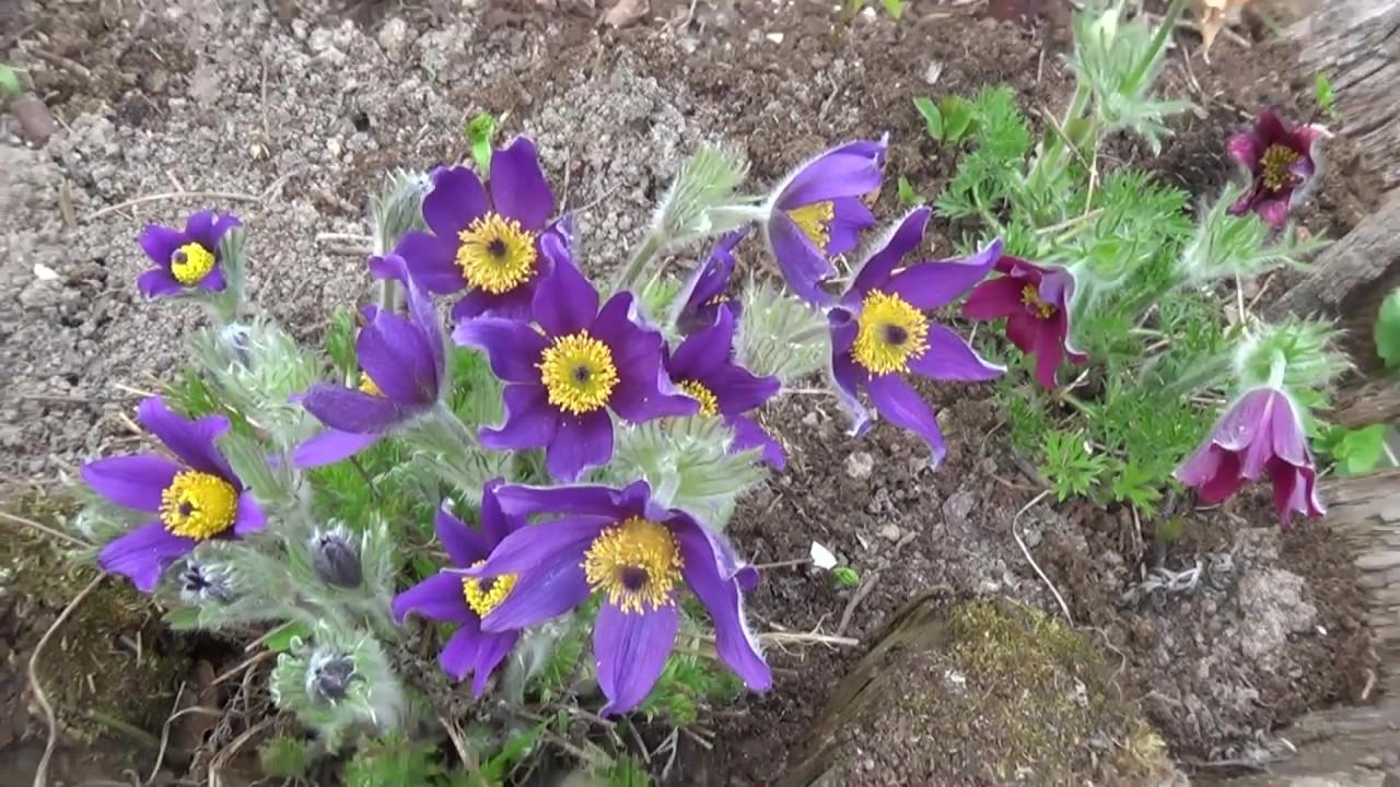 Мой сад 10 мая 2015г. – Смотреть видео онлайн в Моем Мире.