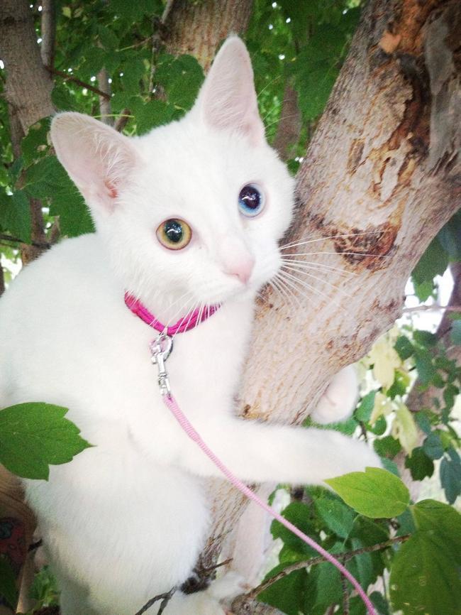 10. Любитель лазить по деревьям   весна, животные