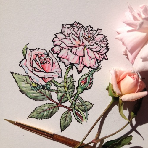 В ожидании весны вместе с Noel Badges Pugh: чудесные иллюстрации цветов