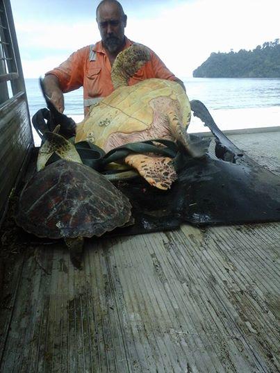 Добрый человек покупает черепах на продовольственном рынке и выпускает в море