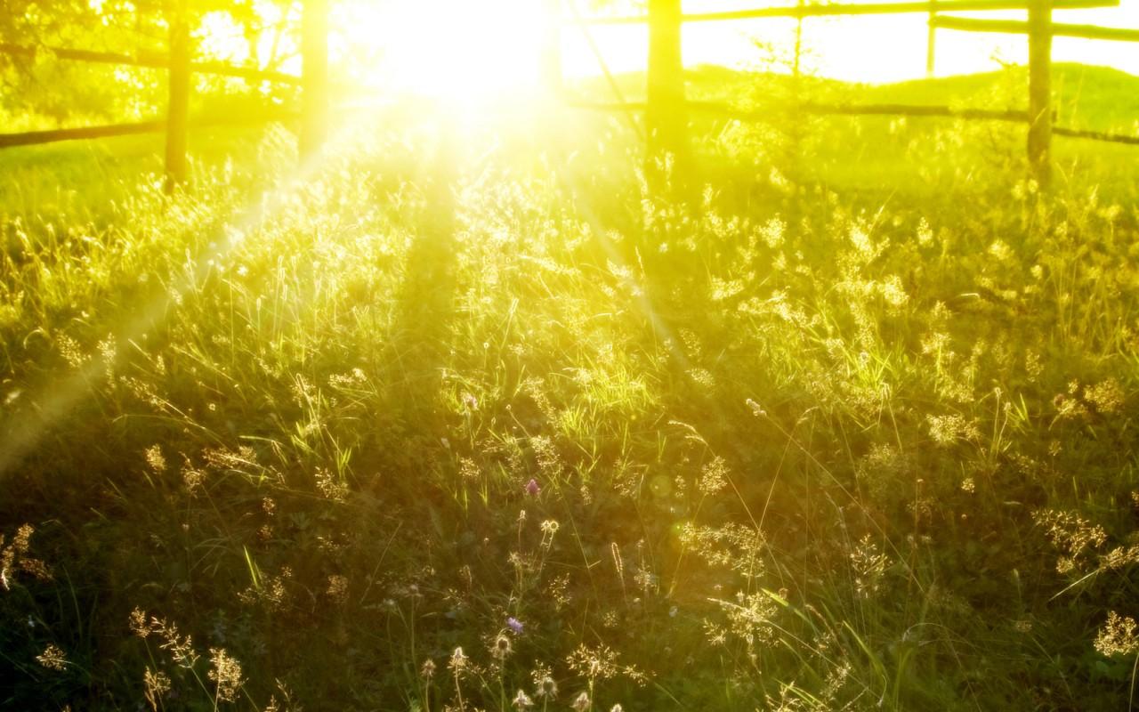 Мята трава польза и вред