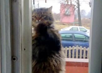 Беременная кошка пришла к ним в дом.