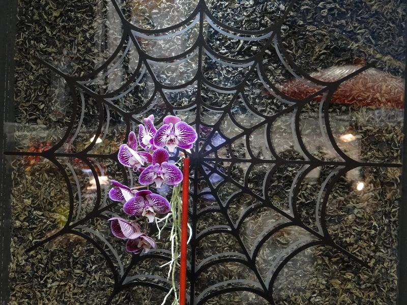 Февраль — в Японии открывается грандиозный фестиваль орхидей. Фантастическое зрелище!