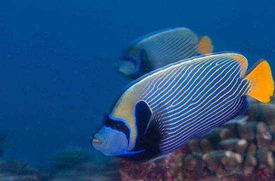 фотопутешествие - 1 (  Красота вымирающих рифов архипелага Феникс. Водопад Игуасу)