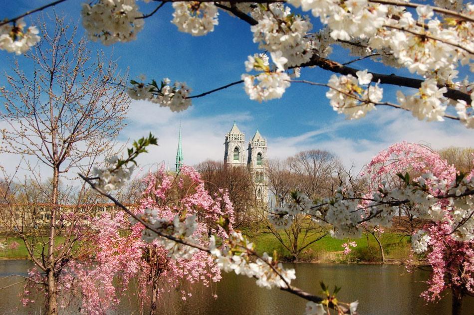 Весны, цветущие сады!