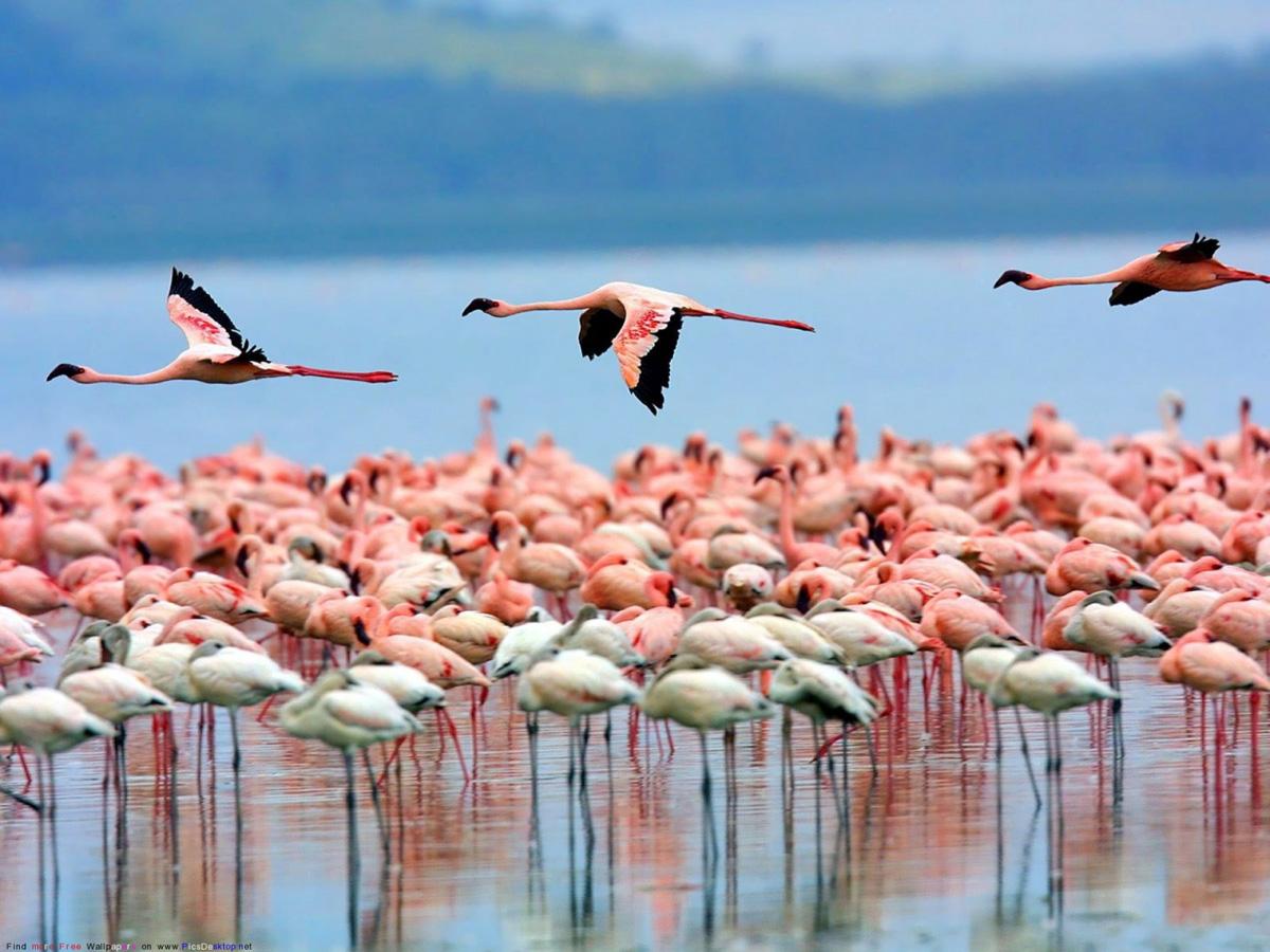 6. Озеро Накуру. 9 уникальных озер
