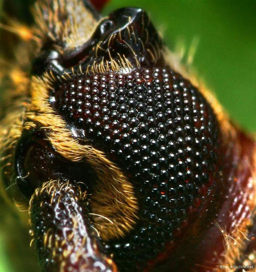 25 макро фотографий насекомых крупным планом. Часть 2