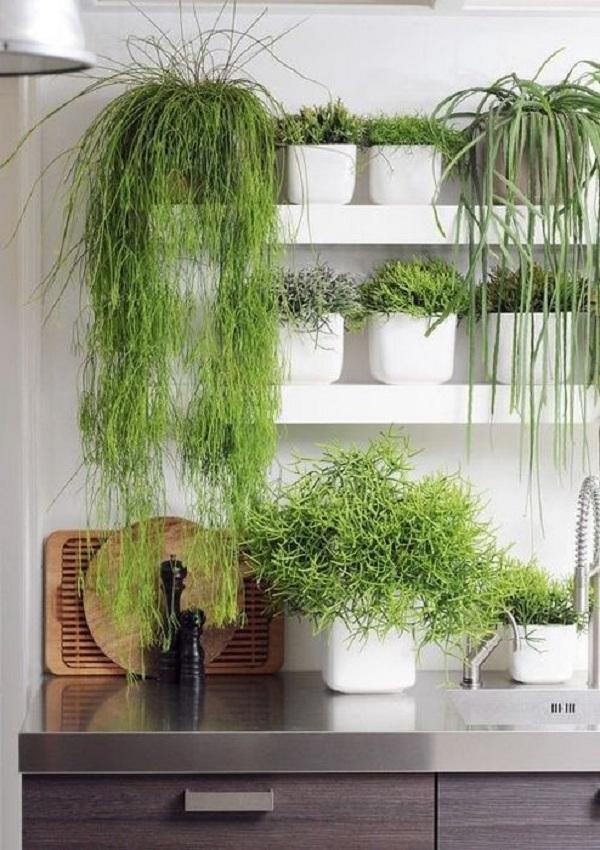 Свежесть зелени и трав круглый год