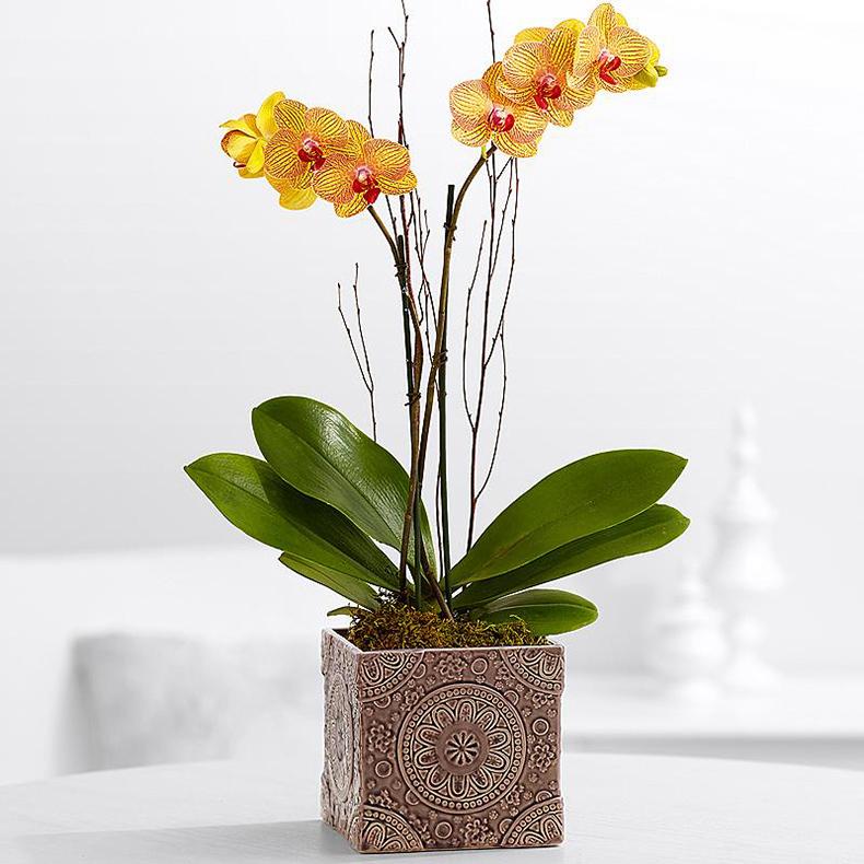 Почему не цветет орхидея — дельные советы цветоводов