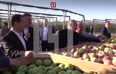 «Если что, яблоками отобьемся»: Путин пошутил о небывалом урожае в Ставрополье