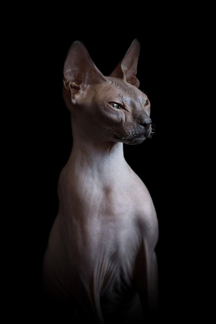 Если есть кошачье ню, то оно выглядит вот так