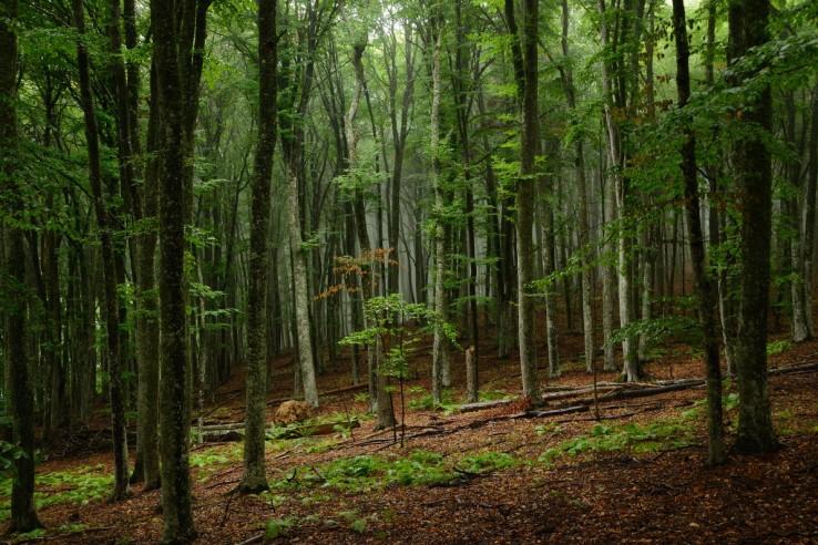 Крымские леса закрыли до конца лета