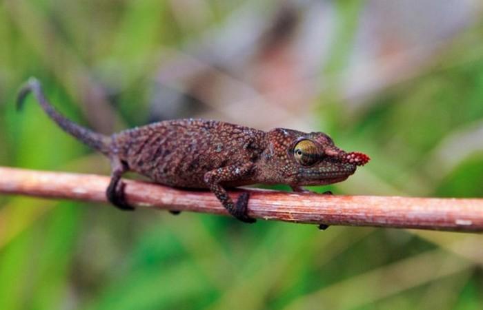 4. Самая древняя рептилия - гилоном животные, земля, наука, эволюция