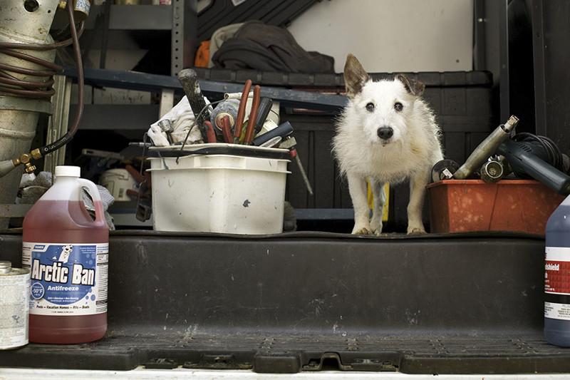 Тиггер (17 лет) собаки, фото собак, фотографии животных