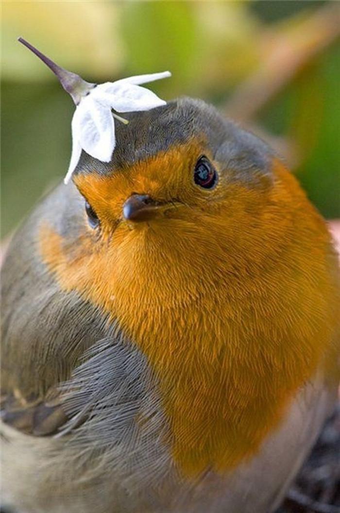 21. Птичка в шляпке момент, фотография