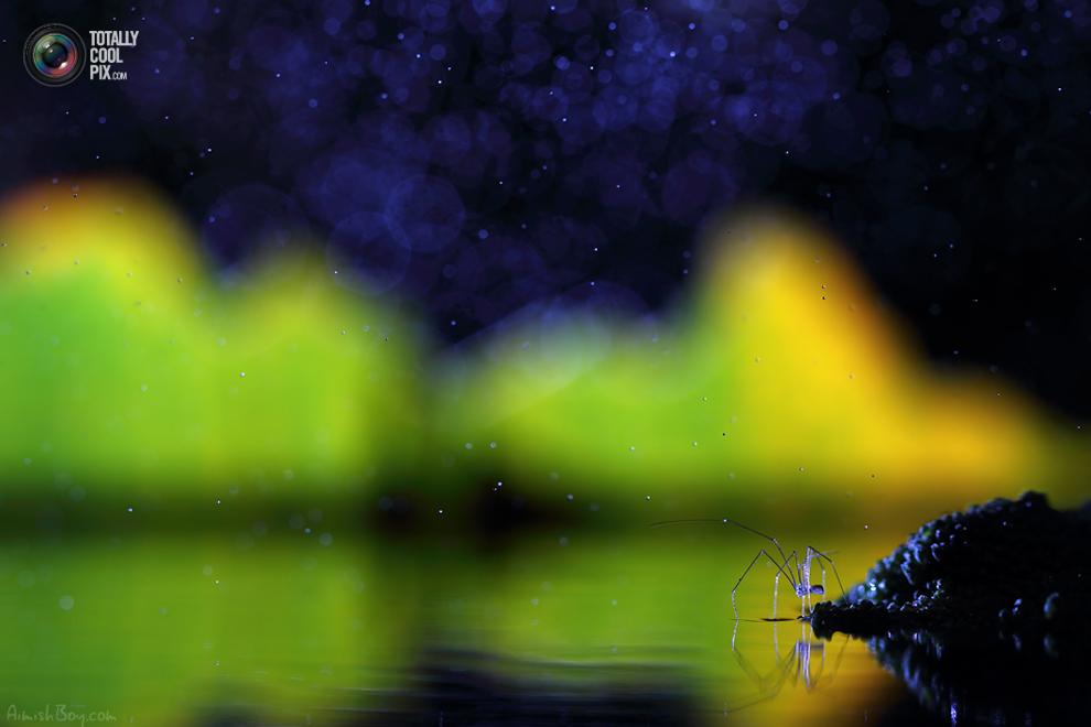aimishboy 027 Удивительная макрофотография: неожиданно гламурные насекомые и многое другое
