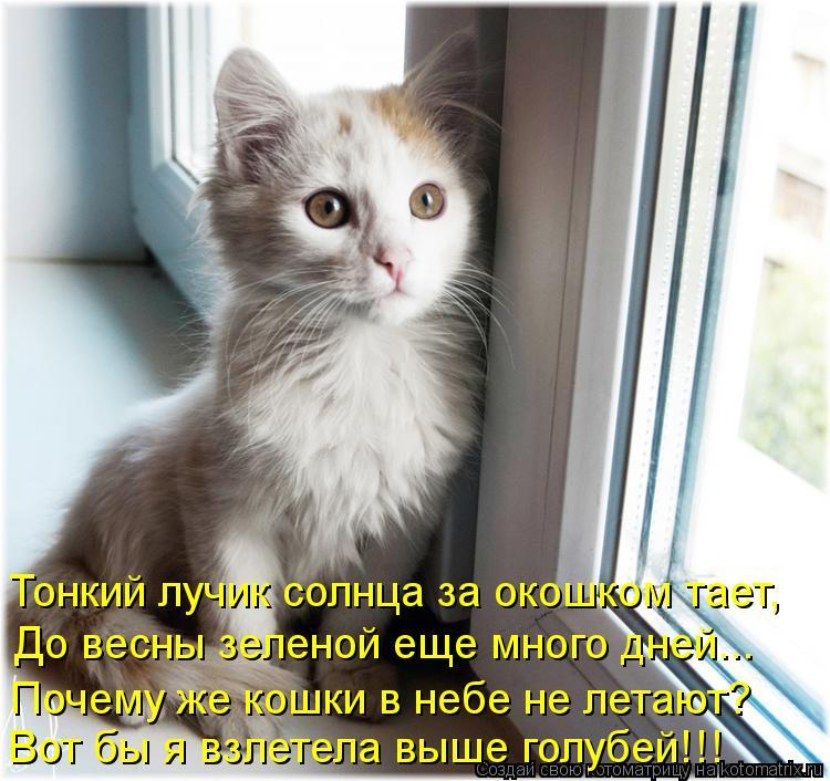 Котоматрица: Тонкий лучик солнца за окошком тает, До весны зеленой еще много дней... Почему же кошки в небе не летают? Вот бы я взлетела выше голубей!!!