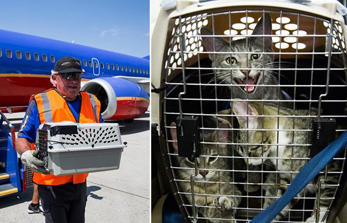Авиакомпания спасла десятки бездомных животных, пострадавших от урагана