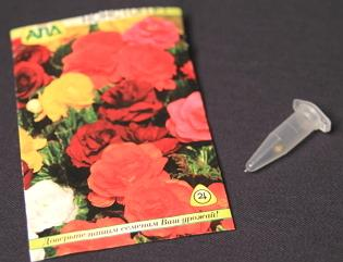 Зимний посев цветов на рассаду