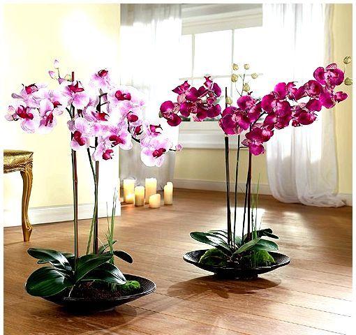 4 способа размножения орхидей