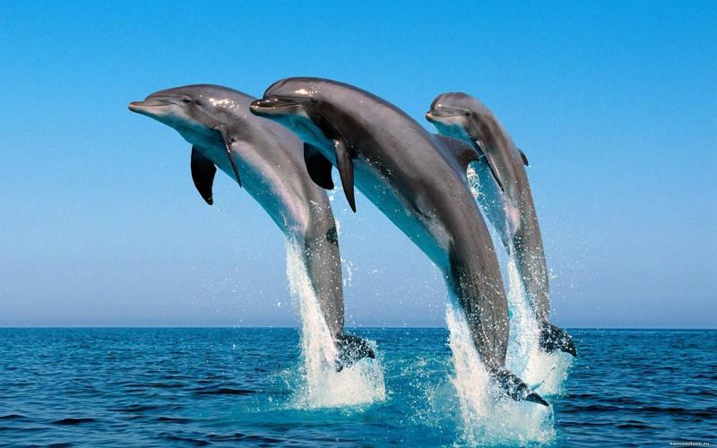 Люди и дельфины история, факты