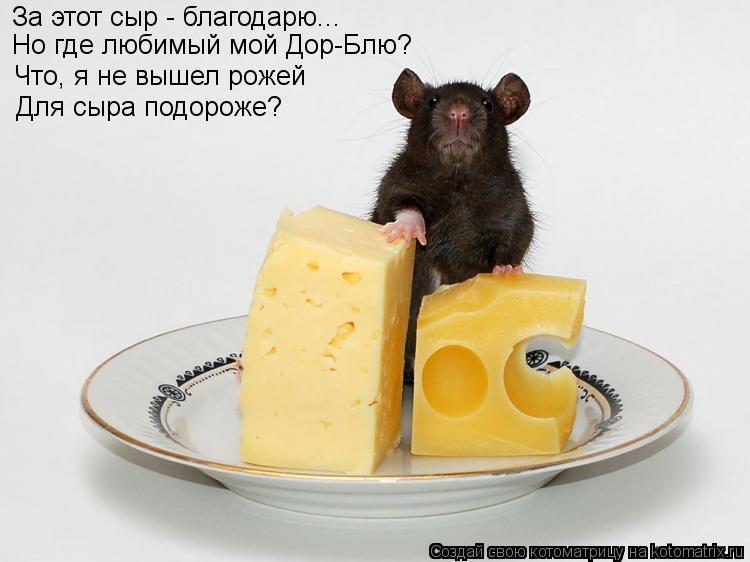 Котоматрица: За этот сыр - благодарю... Но где любимый мой Дор-Блю? Что, я не вышел рожей Для сыра подороже?