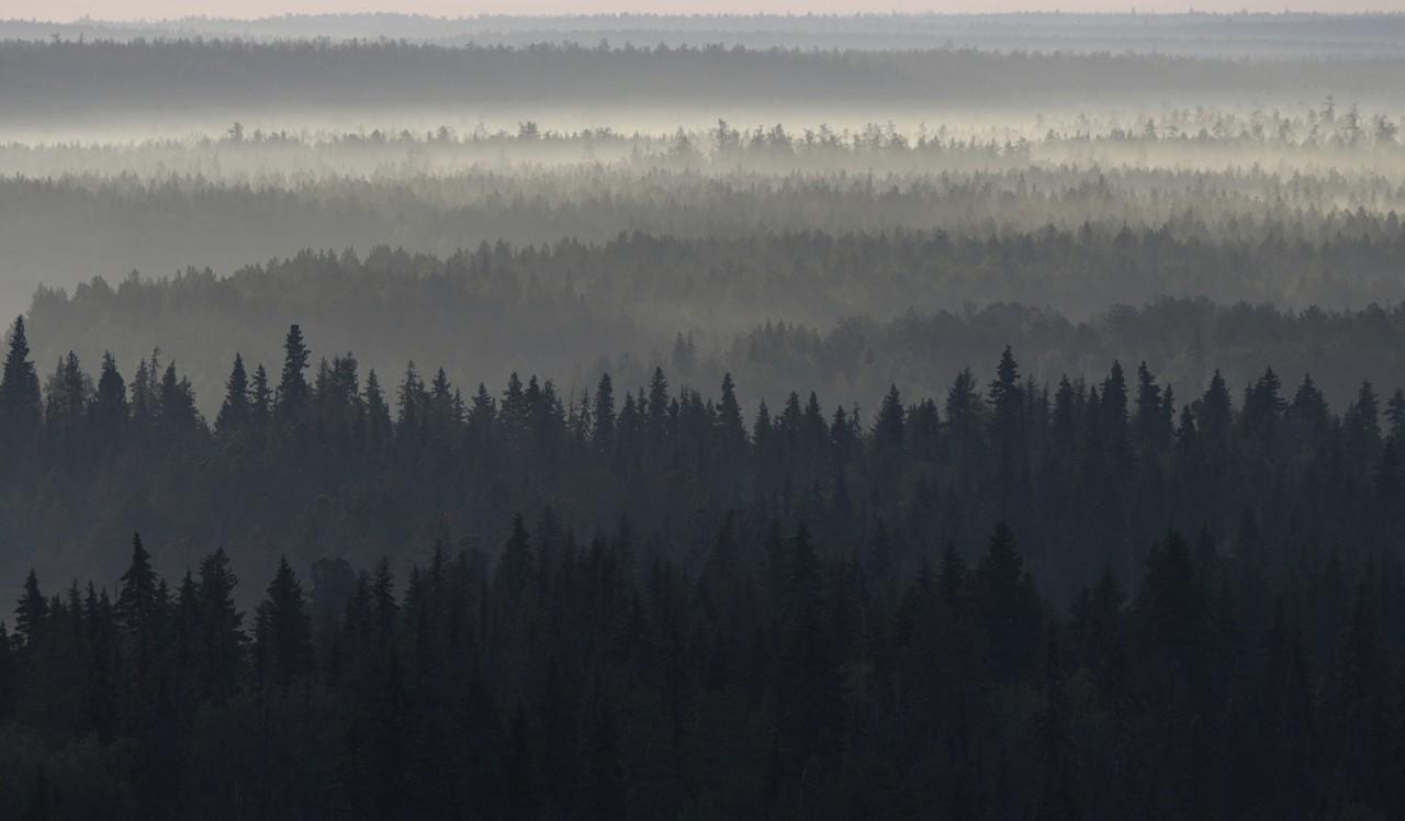 Новый фотопроект о старовозрастных лесах России