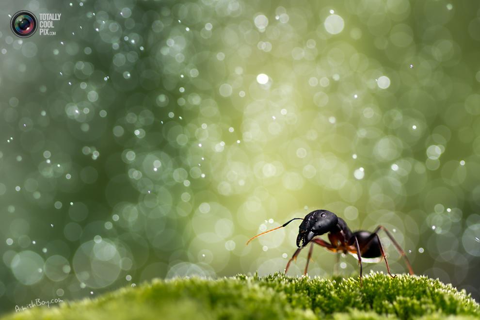 aimishboy 019 Удивительная макрофотография: неожиданно гламурные насекомые и многое другое